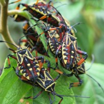 Bunte Käfer unterwegs