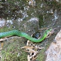 Schlange schnappte sich den Frosch