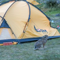 Abendlicher Besuch auf dem Camping Teil 1