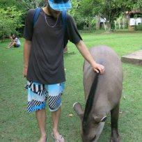 Dani und die Tapir-Dame
