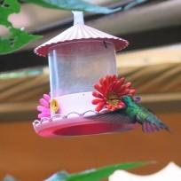 Kolibri bei unserem Hostel