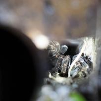 Vogelspinne im Baumstrunk
