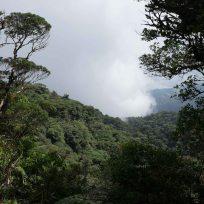 Nebelwald Santa Elena