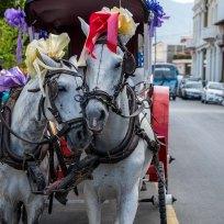 Pferdekutsche in Granada