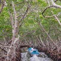 Fahrt durch die Mangroven