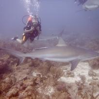Fränzi und die Haie