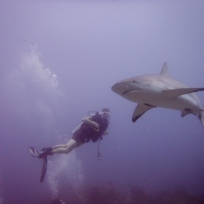 Dani bei den Haien