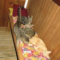 Die Katzenrasselbande