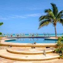 Iguana Paradise! Das Bild könnte an das Hotel verkauft werden für den Werbeprospekt :)