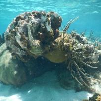 Korallenformation