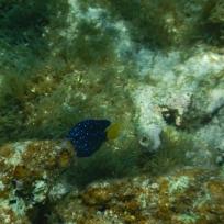 Fränzis Lieblingsfisch