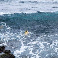 Ali mini Schildkrötli schwümmed im Meer, Köpfli händs is Wasser, d'Schwänzli händs id Hö! :)