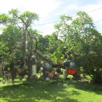 Lustiger Baum an der Road to Hana