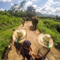 Elefantenspaziergang