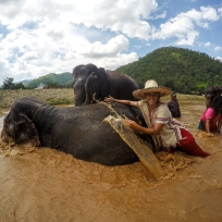 Fränzis neue Berufung - Elefanten Wäscherin
