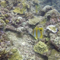 Viele bunte Fische sind uns Unterwasser begegnet