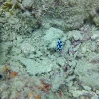 Bunte Unterwasserschnecke