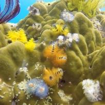"""""""Tannenbäume"""" auf Korallen"""