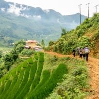 Matschiger Weg entlang den Reisfeldern von Sa Pa